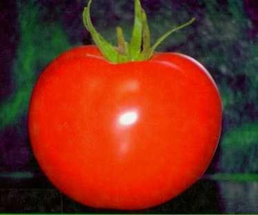 Tartar de tomate y huevo