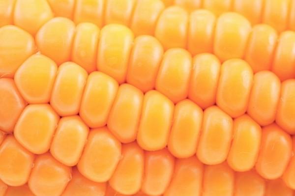 Mazorca de maíz aliñada